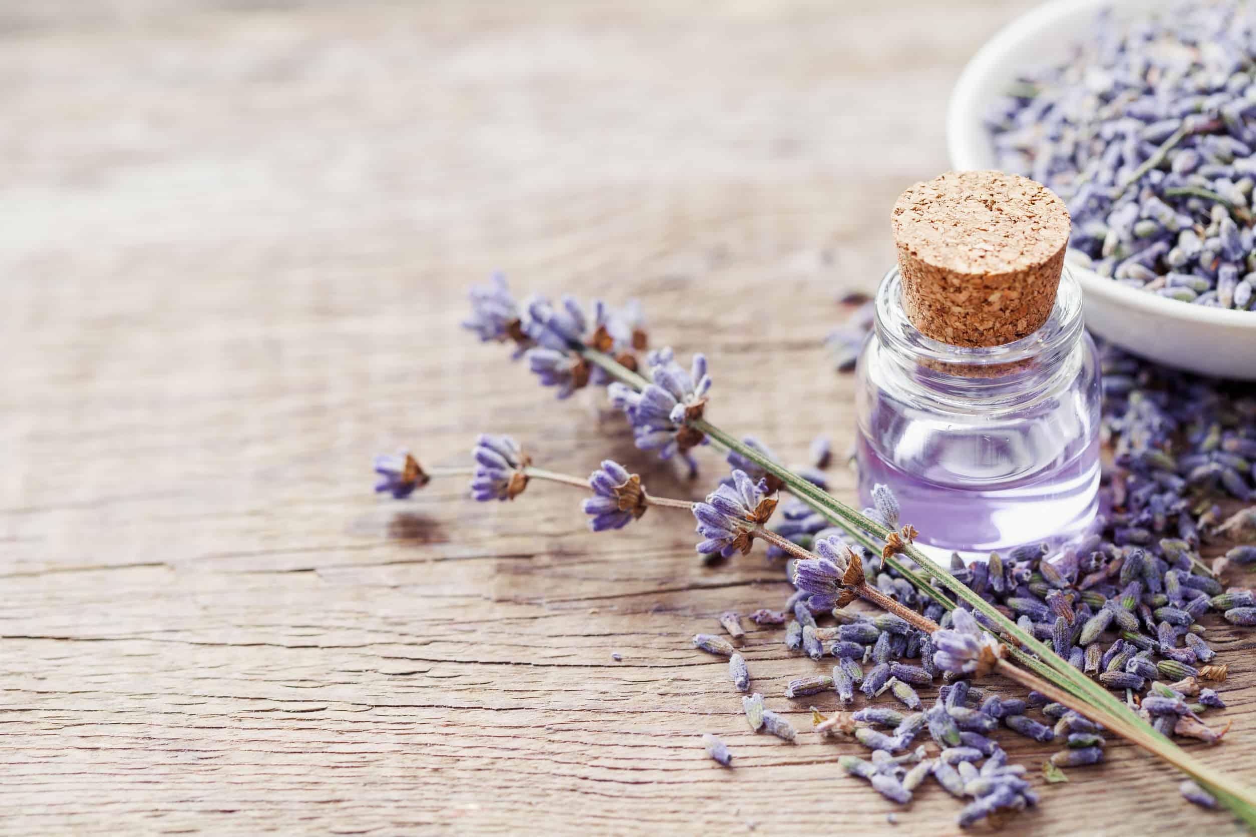 Lavendelöl: Test & Empfehlungen (08/20)