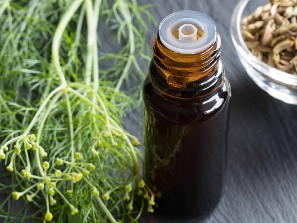 88289603 – a dark bottle of fennel essential oil with fresh fennel tops and fennel seeds in the background