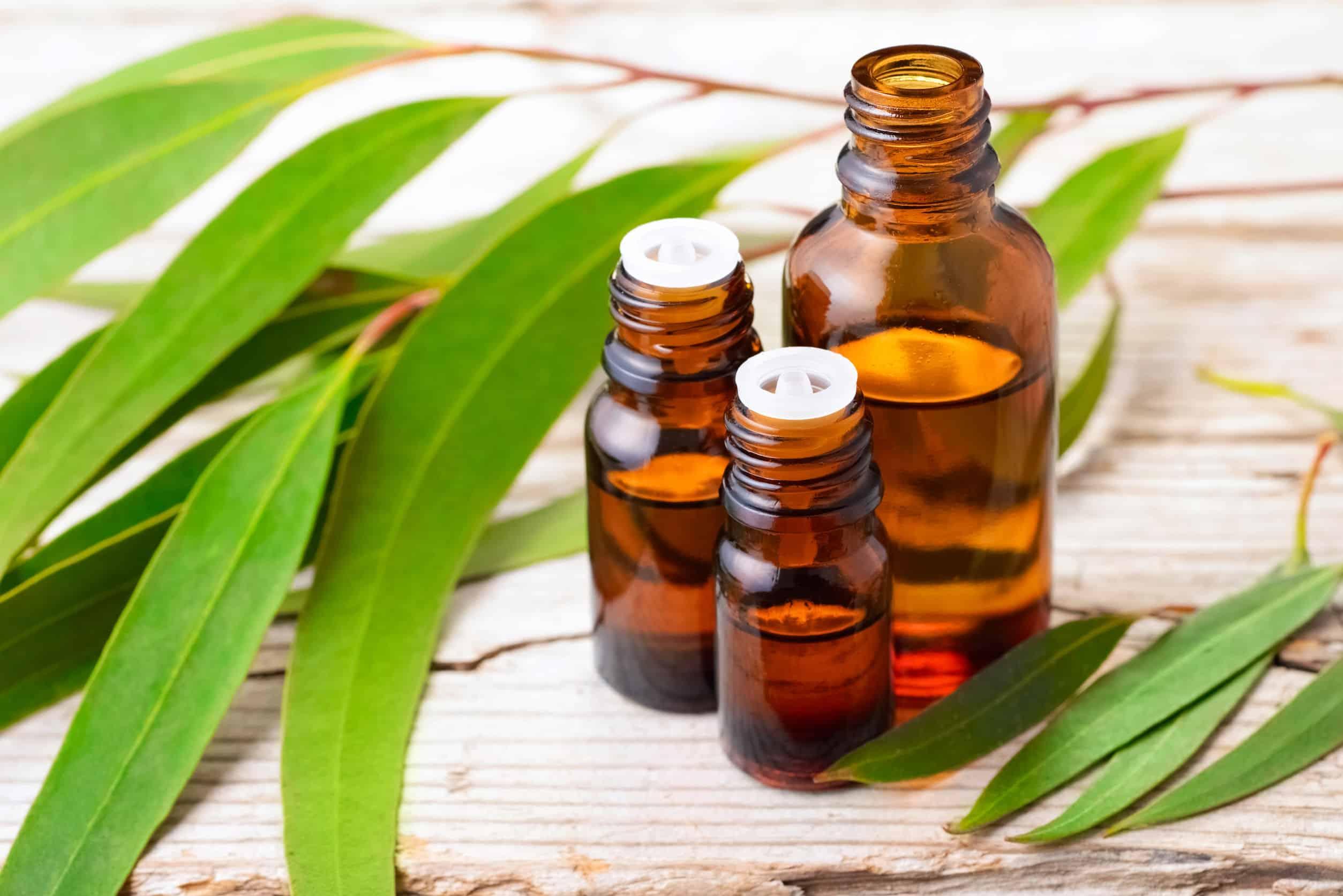 Eukalyptusöl: Test & Empfehlungen (01/21)