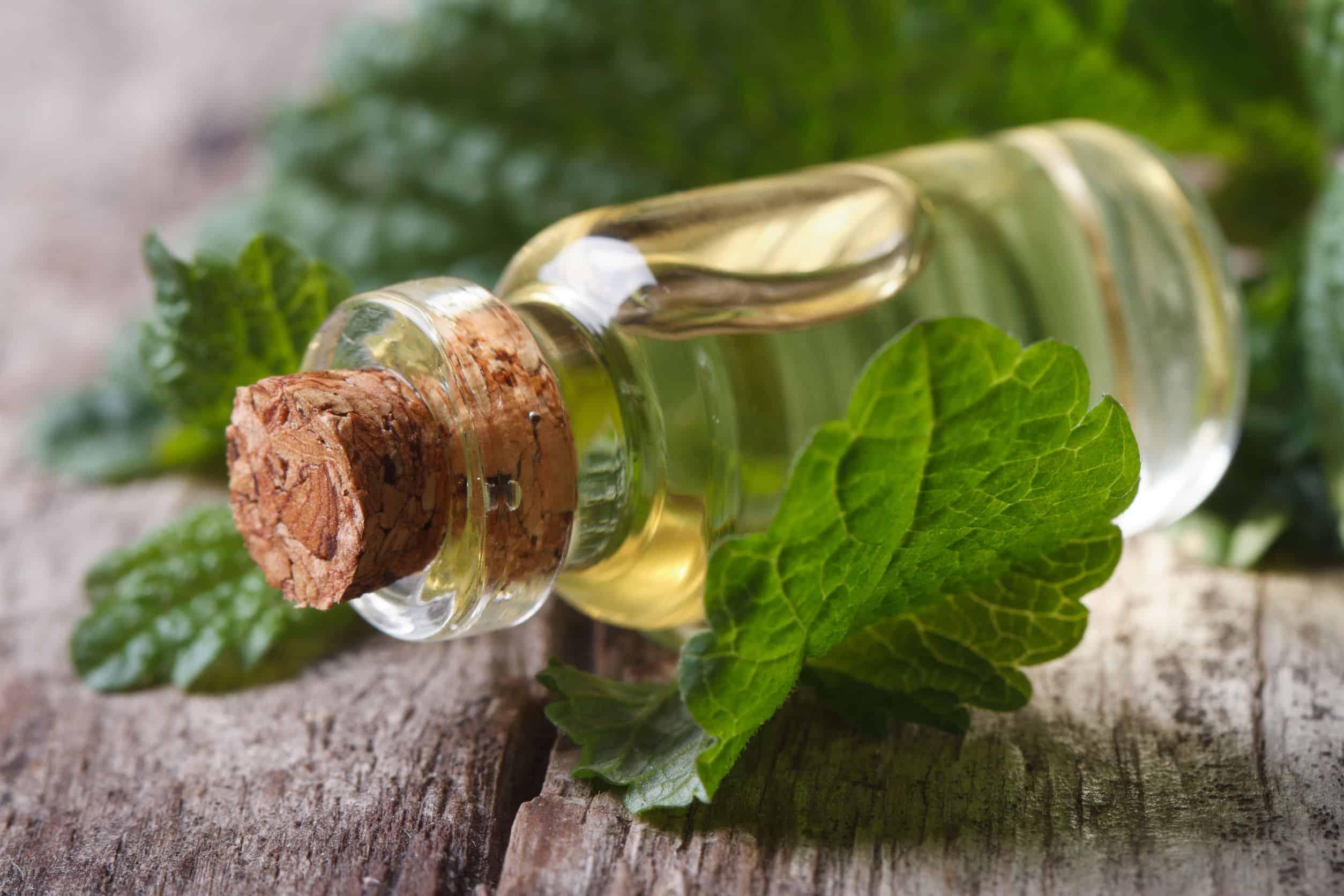 Melissenöl: Test & Empfehlungen (09/20)