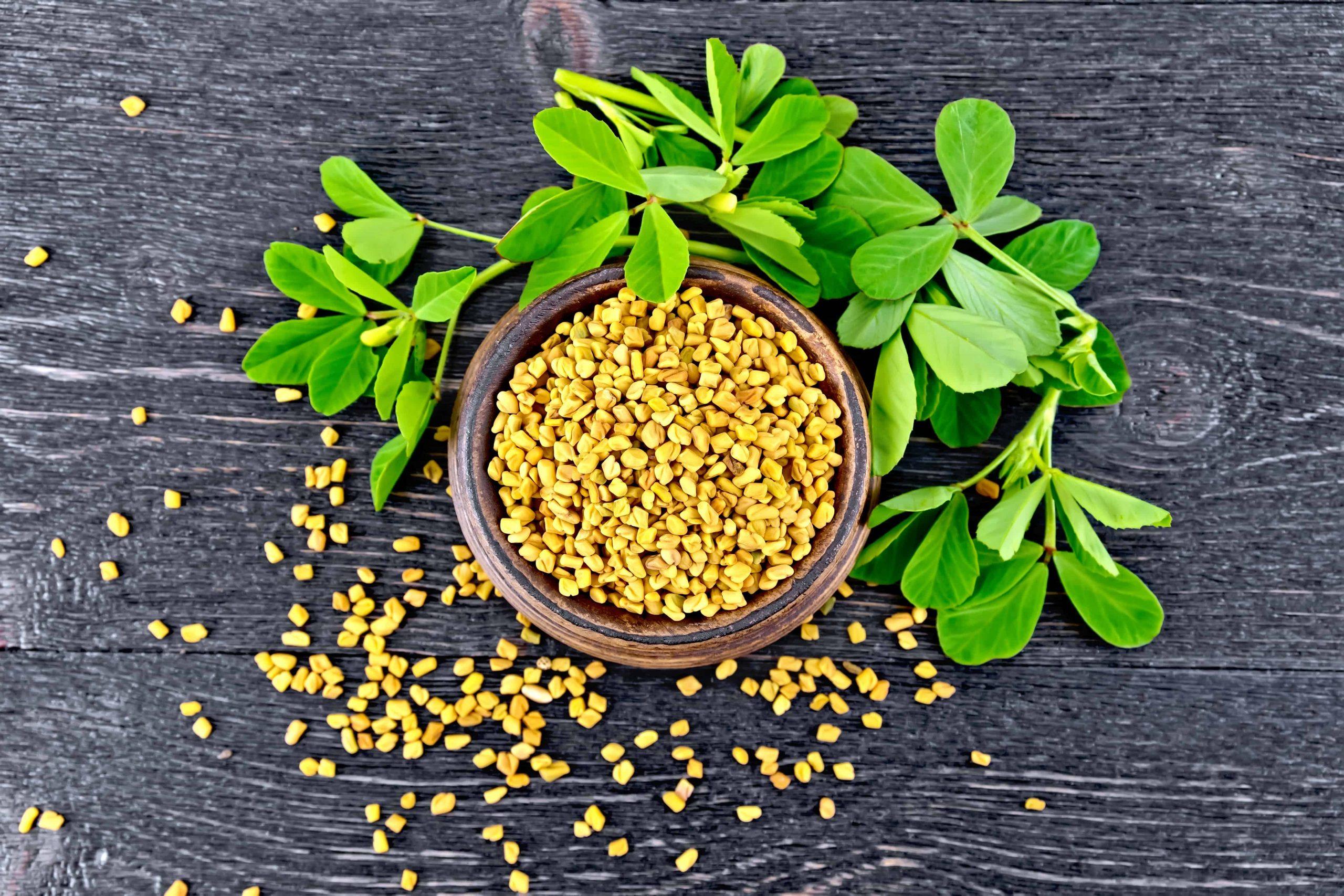 Moringa-Samen werden verwendet, um Gewicht zu verlieren