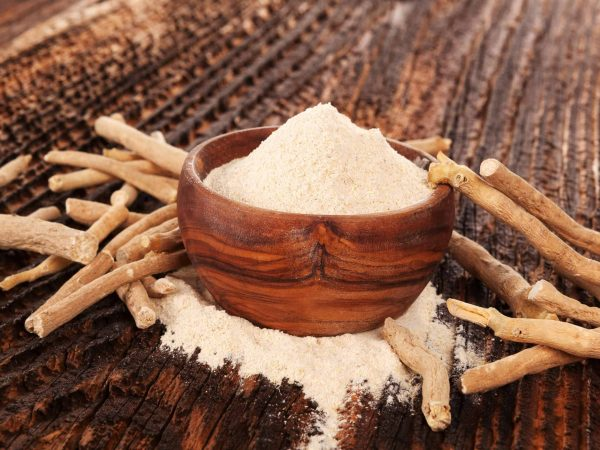 93597497 – heap of ashwagandha powder in wooden bowl  with roots. superfood remedy.