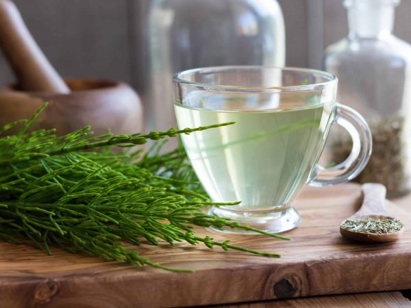 78607710 – a cup of horsetail tea with fresh and dried horsetail plant