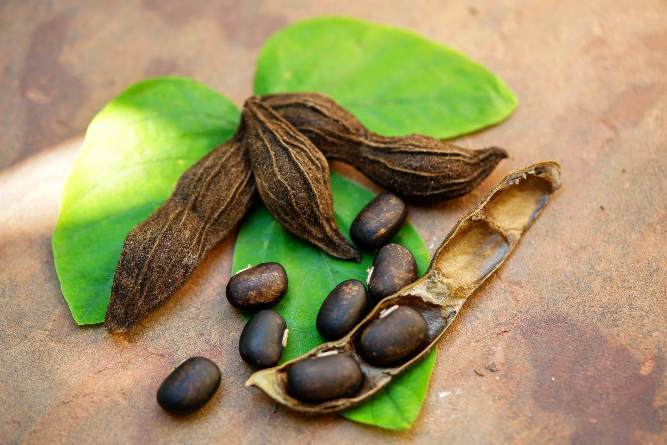 Mucuna pruriens: Test & Empfehlungen (10/20)
