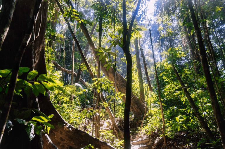 Ein Dschungel in Thailand, bedeckt mit Bäumen und Lianen