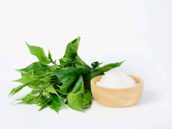 Gymnema inodorum leaf and sugar on white background, medicine herbal plant for diabetes treatment, function is control sugar level in blood